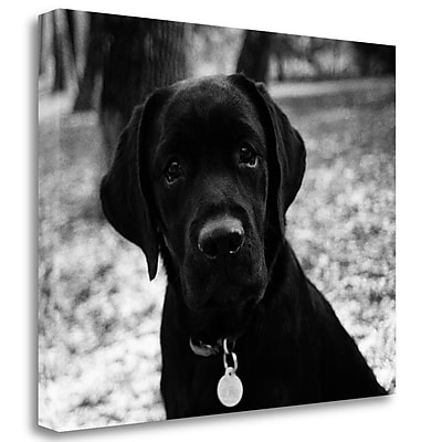 Tangletown Fine Art 'Zoey' Photographic Print on Wrapped Canvas; 21'' H x 26'' W