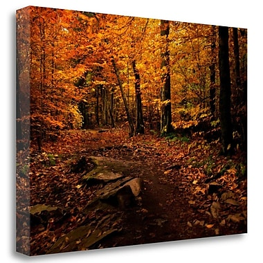 Tangletown Fine Art 'Autumn Path' Photographic Print on Wrapped Canvas; 20'' H x 27'' W