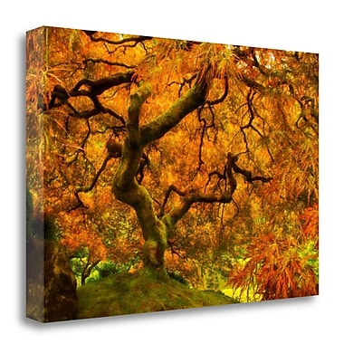 Tangletown Fine Art 'Wild Fire' Photographic Print on Wrapped Canvas; 32'' H x 48'' W