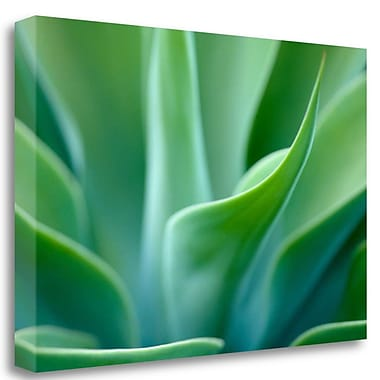 Tangletown Fine Art 'Agave 5' Graphic Art Print on Wrapped Canvas; 17'' H x 26'' W