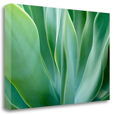 Tangletown Fine Art 'Agave 6' Graphic Art Print on Wrapped Canvas; 17'' H x 26'' W