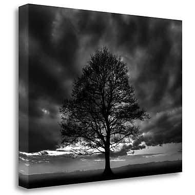 Tangletown Fine Art 'Great Tree' Photographic Print on Wrapped Canvas; 21'' H x 28'' W
