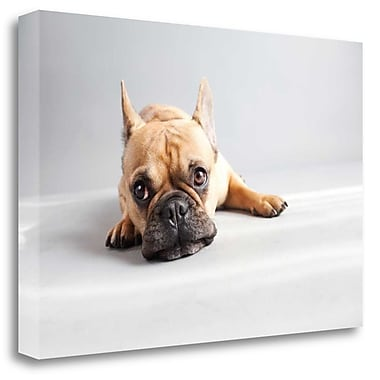 Tangletown Fine Art 'Sad Frenchie' Photographic Print on Wrapped Canvas; 17'' H x 26'' W