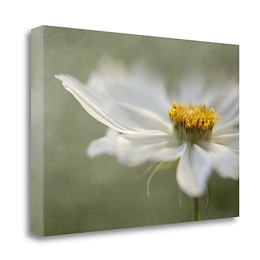 Tangletown Fine Art 'Whisper' Graphic Art Print on Wrapped Canvas; 20'' H x 29'' W