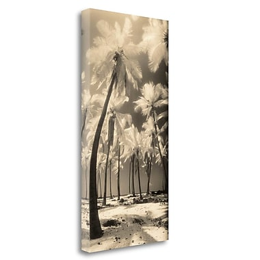 Tangletown Fine Art 'Palm Shadows I' Graphic Art Print on Wrapped Canvas; 32'' H x 16'' W