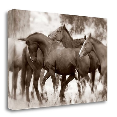 Tangletown Fine Art 'The Herd' Photographic Print on Wrapped Canvas; 24'' H x 36'' W