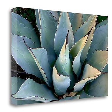 Tangletown Fine Art 'Agave New Mexico' Photographic Print on Wrapped Canvas; 26'' H x 40'' W