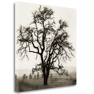 Tangletown Fine Art 'Country Oak Tree' Photographic Print on Wrapped Canvas; 25'' H x 25'' W