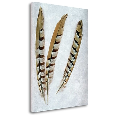 Tangletown Fine Art 'Feather - 1' Graphic Art Print on Wrapped Canvas; 38'' H x 28'' W