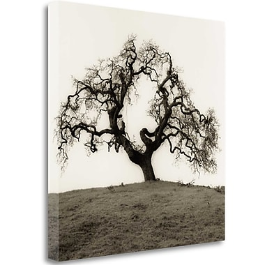 Tangletown Fine Art 'Hillside Oak Tree' Photographic Print on Wrapped Canvas; 35'' H x 35'' W
