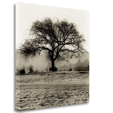 Tangletown Fine Art 'Willow Tree' Graphic Art Print on Wrapped Canvas; 20'' H x 20'' W