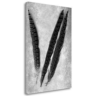 Tangletown Fine Art 'Feathers B-W - 3' Graphic Art Print on Wrapped Canvas; 34'' H x 25'' W