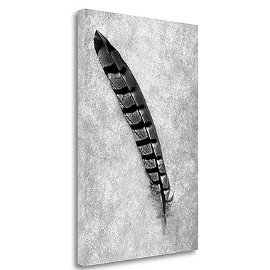 Tangletown Fine Art 'Feathers - 6' Graphic Art Print on Wrapped Canvas; 29'' H x 20'' W