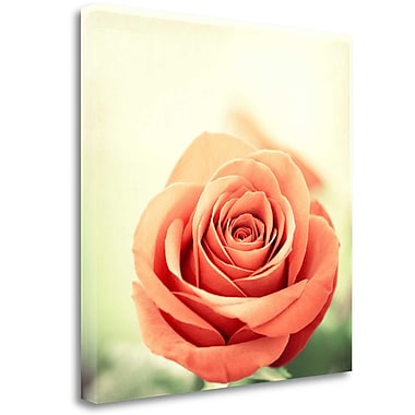 Tangletown Fine Art 'My Perfect Rose' Graphic Art Print on Wrapped Canvas; 24'' H x 24'' W