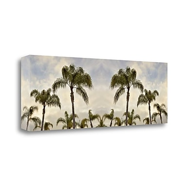 Tangletown Fine Art 'Palm Banner - 2 - Color' Photographic Print on Wrapped Canvas; 16'' H x 48'' W