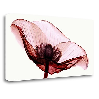 Tangletown Fine Art 'Anemone I' Graphic Art Print on Wrapped Canvas; 20'' H x 40'' W