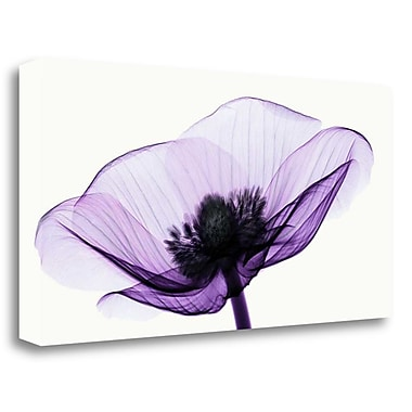 Tangletown Fine Art 'Anemone II' Graphic Art Print on Wrapped Canvas; 20'' H x 40'' W