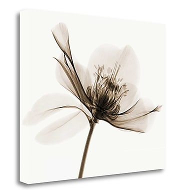 Tangletown Fine Art 'Hellebore II' Graphic Art Print on Wrapped Canvas; 26'' H x 32'' W