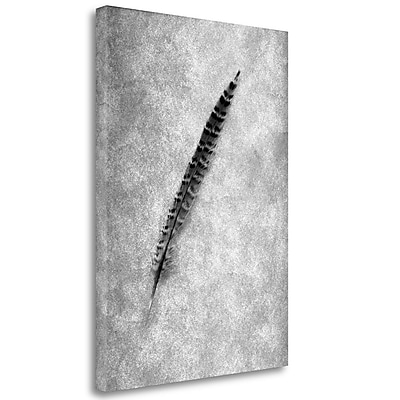 Tangletown Fine Art 'Feathers - 9' Graphic Art Print on Wrapped Canvas; 48'' H x 35'' W