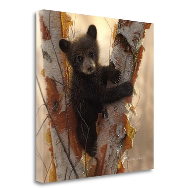 Tangletown Fine Art 'Curious Cub I' Photographic Print on Wrapped Canvas; 20'' H x 20'' W