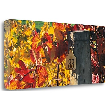 Tangletown Fine Art 'Row 88' Photographic Print on Wrapped Canvas; 16'' H x 34'' W