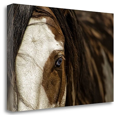 Tangletown Fine Art 'Blue' Photographic Print on Wrapped Canvas; 19'' H x 28'' W