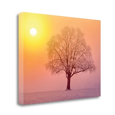 Tangletown Fine Art 'Ombre Tree' Photographic Print on Wrapped Canvas; 25'' H x 33'' W