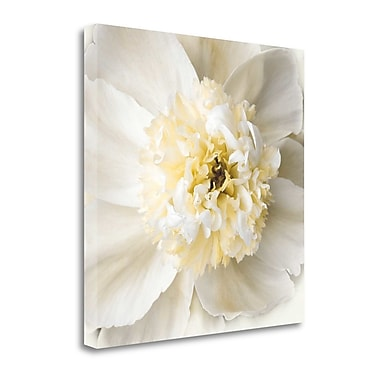 Tangletown Fine Art 'Peony Praise' Photographic Print on Wrapped Canvas; 30'' H x 30'' W