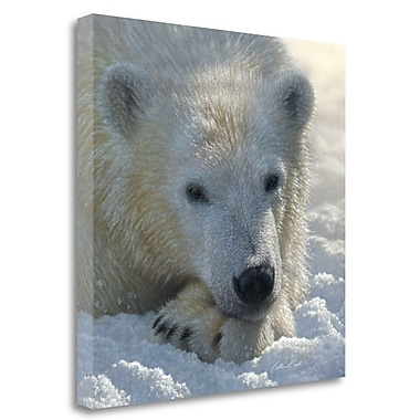 Tangletown Fine Art 'Polar Bear Club' Photographic Print on Wrapped Canvas; 35'' H x 35'' W