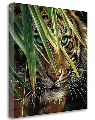 Tangletown Fine Art 'Tiger Eyes' Photographic Print on Wrapped Canvas; 20'' H x 20'' W