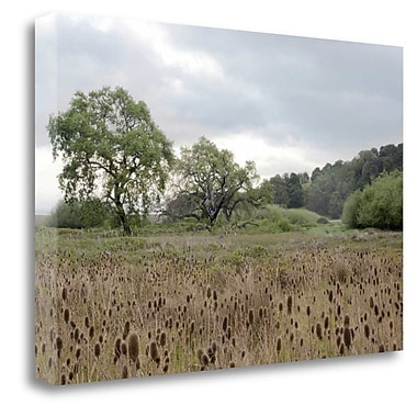 Tangletown Fine Art 'Oak Tree - 81' Photographic Print on Wrapped Canvas; 20'' H x 31'' W