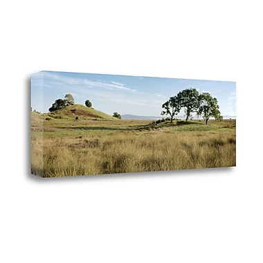 Tangletown Fine Art 'Oak Tree - 83' Photographic Print on Wrapped Canvas; 13'' H x 39'' W