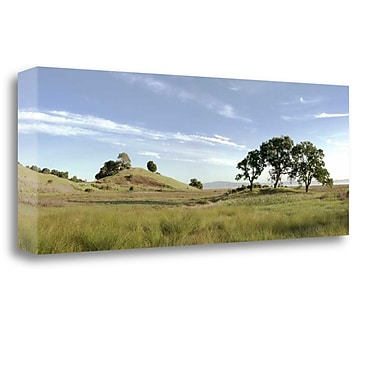 Tangletown Fine Art 'Oak Tree - 82' Photographic Print on Wrapped Canvas; 12'' H x 34'' W