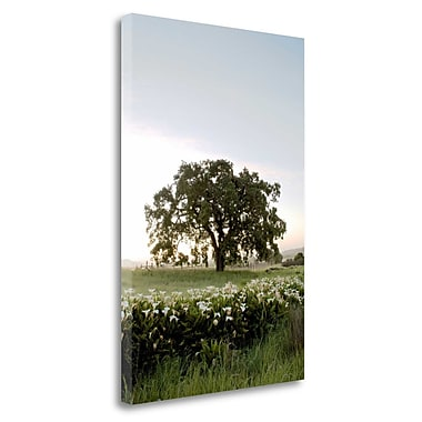Tangletown Fine Art 'Oak Tree - 84' Photographic Print on Wrapped Canvas; 28'' H x 19'' W