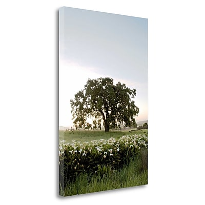 Tangletown Fine Art 'Oak Tree - 84' Photographic Print on Wrapped Canvas; 40'' H x 26'' W