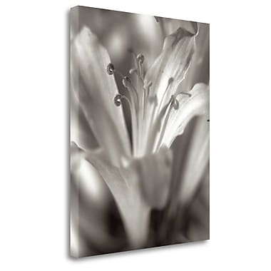 Tangletown Fine Art 'Florison - 14' Graphic Art Print on Wrapped Canvas; 23'' H x 18'' W