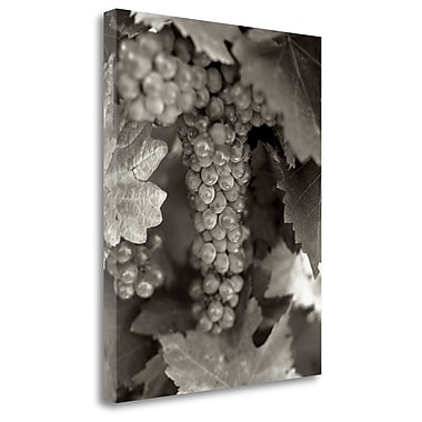 Tangletown Fine Art 'Grapes - 22' Graphic Art Print on Wrapped Canvas; 45'' H x 35'' W