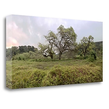 Tangletown Fine Art 'Oak Tree Pano - 133' Photographic Print on Wrapped Canvas; 17'' H x 34'' W