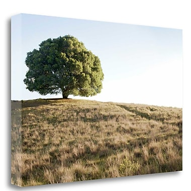 Tangletown Fine Art 'Oak Tree - 76' Photographic Print on Wrapped Canvas; 21'' H x 32'' W