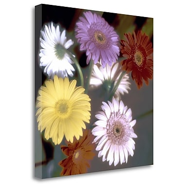 Tangletown Fine Art 'Floral Color - 6' Graphic Art Print on Wrapped Canvas; 25'' H x 25'' W