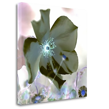 Tangletown Fine Art 'Floral Color - 16' Graphic Art Print on Wrapped Canvas; 20'' H x 20'' W