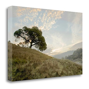 Tangletown Fine Art 'Oak Tree - 11' Photographic Print on Wrapped Canvas; 26'' H x 40'' W