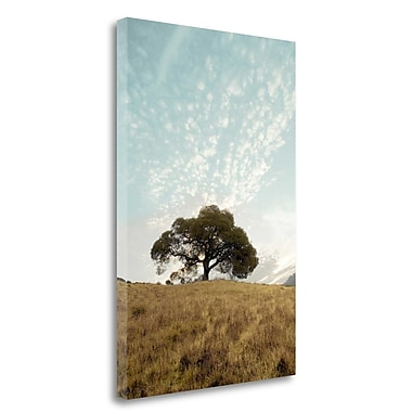 Tangletown Fine Art 'Oak Tree - 12' Photographic Print on Wrapped Canvas; 24'' H x 16'' W