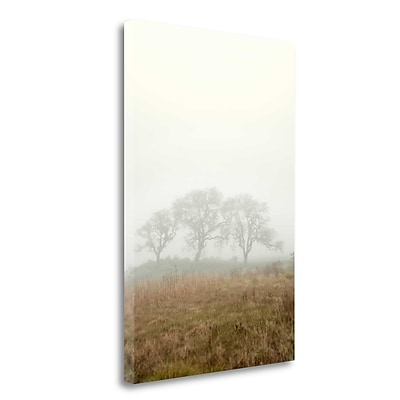 Tangletown Fine Art 'Oak Tree - 17' Photographic Print on Wrapped Canvas; 40'' H x 26'' W