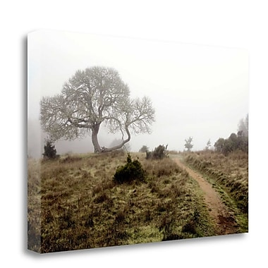 Tangletown Fine Art 'Oak Tree - 25' Photographic Print on Wrapped Canvas; 19'' H x 28'' W