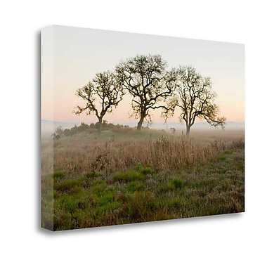 Tangletown Fine Art 'Oak Tree - 31' Photographic Print on Wrapped Canvas; 21'' H x 32'' W