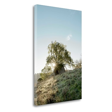 Tangletown Fine Art 'Oak Tree - 35' Photographic Print on Wrapped Canvas; 24'' H x 16'' W