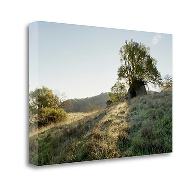 Tangletown Fine Art 'Oak Tree - 36' Photographic Print on Wrapped Canvas; 19'' H x 28'' W