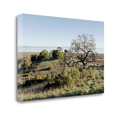Tangletown Fine Art 'Oak Tree - 38' Photographic Print on Wrapped Canvas; 19'' H x 28'' W