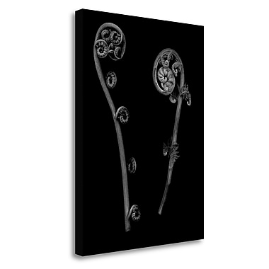 Tangletown Fine Art 'Floral B-W - 22' Graphic Art Print on Wrapped Canvas; 38'' H x 28'' W